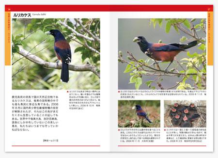 奄美野鳥図鑑2