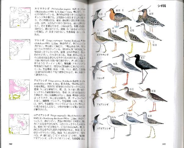 韓国の鳥類内容