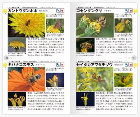 昆虫の集まる花ハンドブック2