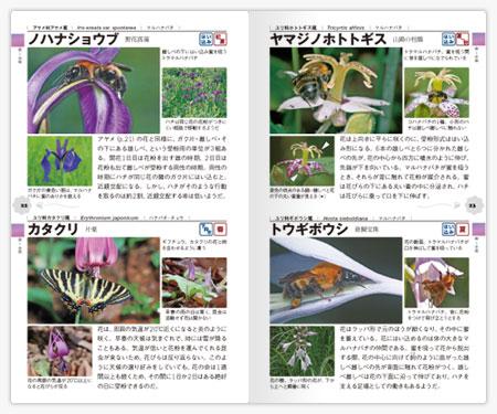 昆虫の集まる花ハンドブック3