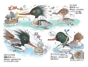 非実用野鳥おもしろ図鑑