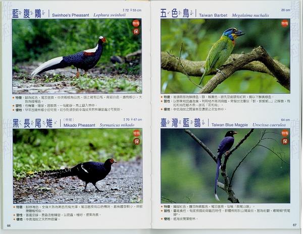台湾常見100種鳥類中