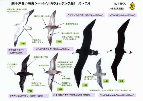 銚子沖海鳥